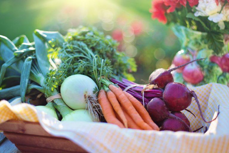 Rozsady warzyw